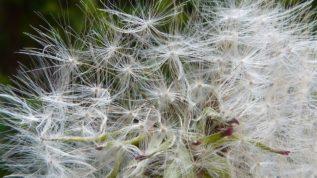 Wie kann Hypnose bei Allergien helfen?