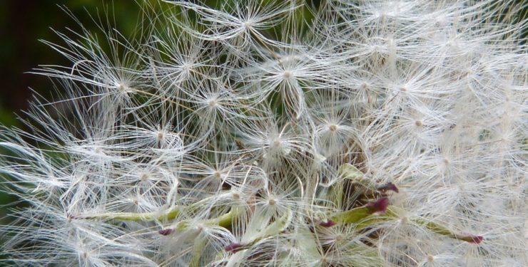 Erfahren Sie, wie Hypnose bei Allergien und Heuschnupfen helfen kann