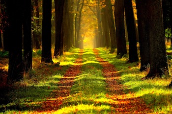Walk and Talk durch den Stadtwald