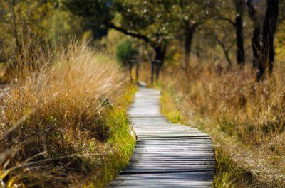 Die Walk and Talk Methode